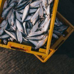 fish in box
