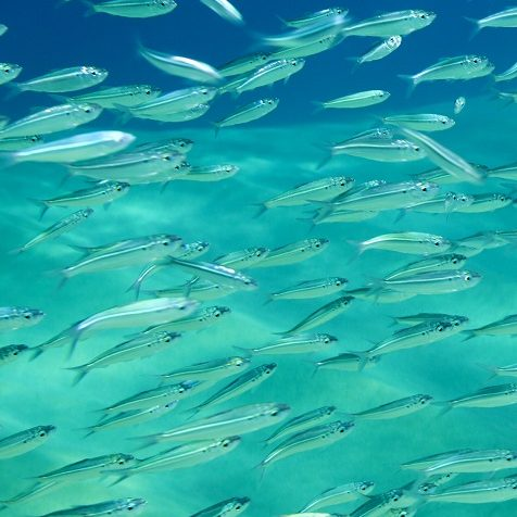 fish environment
