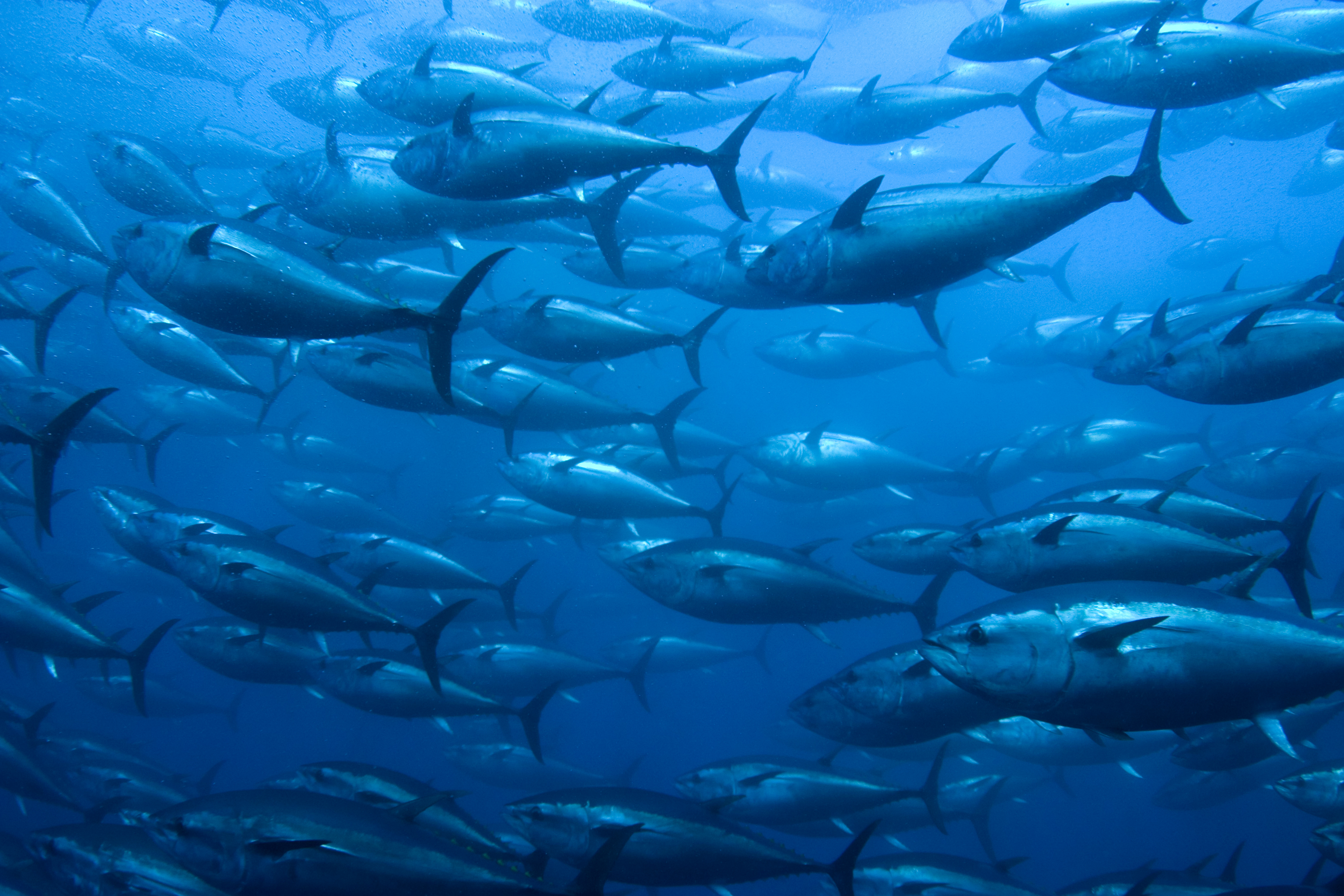 Tuna Fisheries management pacific Ocean