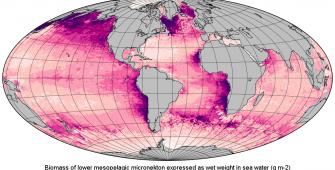 marine resources environment monitoring fish population studies zooplankton micronekton Copernicus