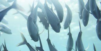 climate change marine life