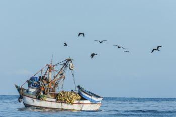 30-years-anniversary-CLS-fisheries